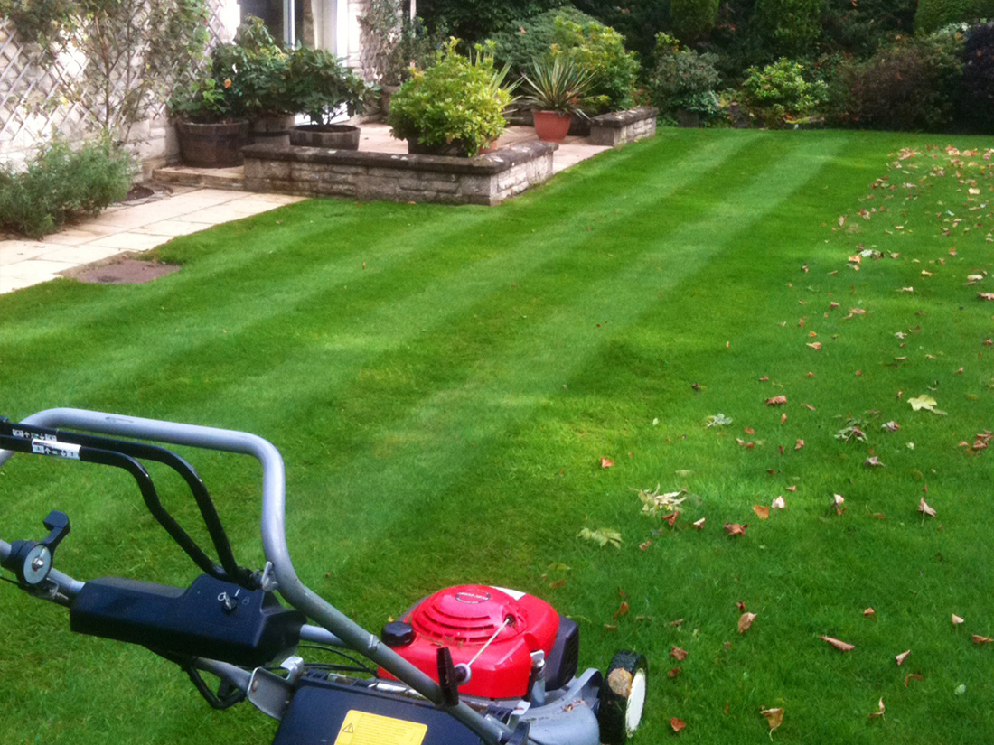 Turfing and lawn care